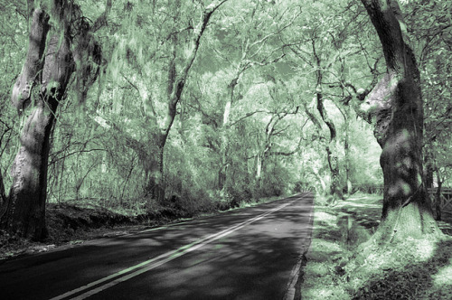 Canopy Road 2 on Flickr.