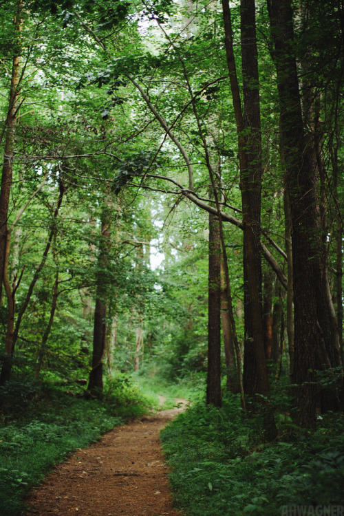 theoceanrolls:  Trail Through The Woods (by Andrew H Wagner)