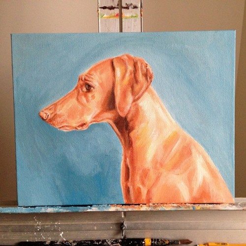 Csaba the Vizsla #art #painting
