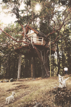 alli3pie:  this is so cute, i wish i had a tree house but my tree has like 1 branch… sucks.