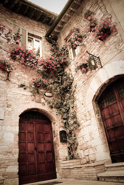 valerie-jeanne:  This reminds me of a vine Romeo would climb to reach Juliet.