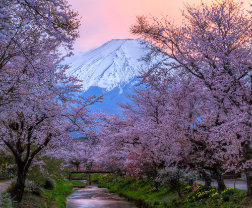 landscapelifescape:  Mount Fuji, Japan  Sakura - Sunset by Natasha Pnini  beautiful