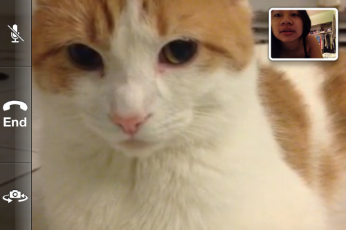 Kitty Skype callz