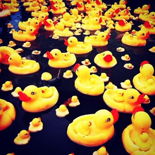 Obsess people with tiny yellow rubber duck. Am I?