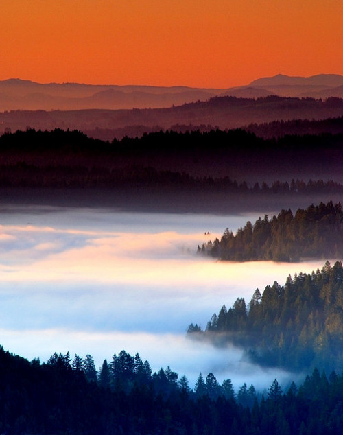 ethereo:  Sea of Fog | by davidkiene