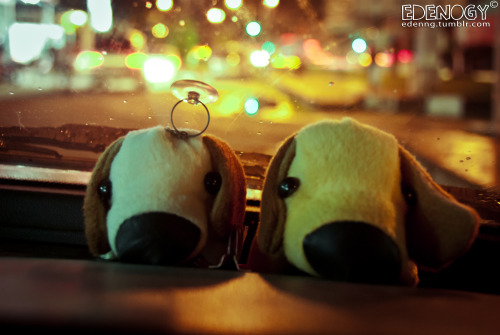 The toy dogs in my car. =)