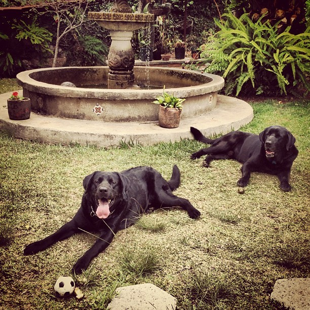 Play time with Malin and Mateo (at Casa de Arabella Salaverry y Leonardo Perucci, Sabanilla, Montes de Oca, San Jose)