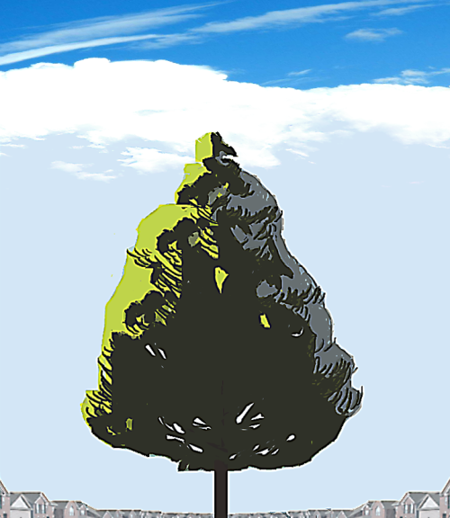 BALD CYPRESS gonna try doin a series of trees since i know nothin about them. except that i love them!
