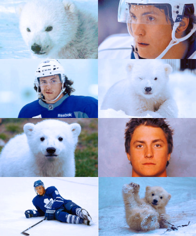 Actual Polar Bear Cub: Tyler Bozak (♕)
