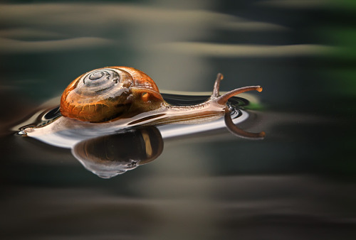 slow but sure by shikhei goh
