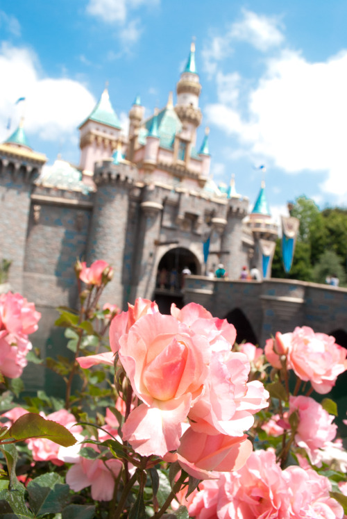 whimsicalmela:  Sleeping Beauty Castle.