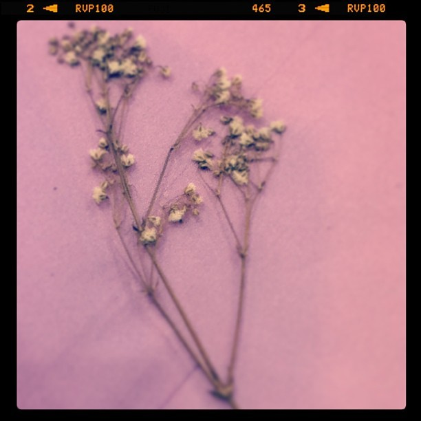 Dried flowers from someone special. #nostalgia