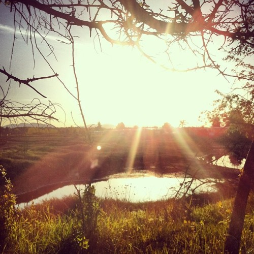 Sun☀ #sun #sky #branches #water #beautiful