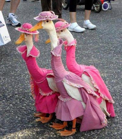 awkwardvagina:  me and my girls on the way to prom  IT'S THE ARISTOCATS GEESE OMG