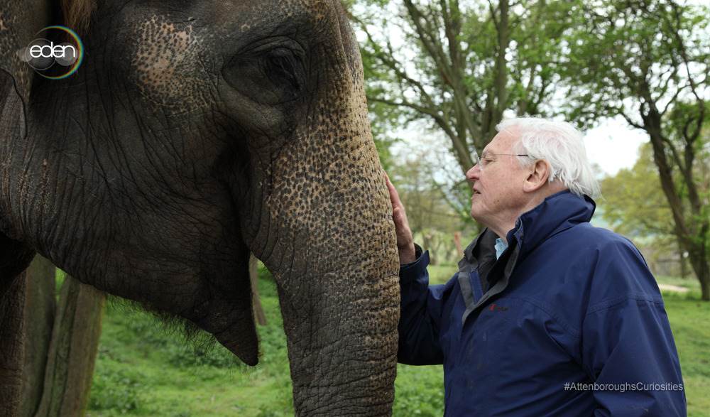 Who's watching David Attenborough's Natural Curiosities?You can watch exclusive clips and trailers on our website.