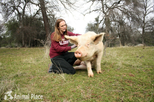 animalplace:  This is me and 12-yr-old Susie, who is a human whisperer capable of drawing people to her and convincing them to rub her belly. You cannot resist Susie because she is irresistible. Look it up in a dictionary.