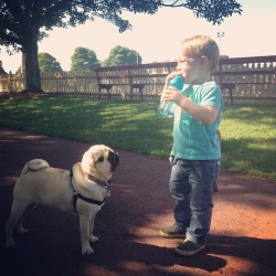Hey kid, give that to me. #pug #dog #park #cute  (at St Leonards Park)
