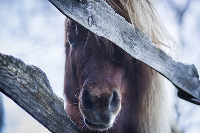 caterpiii:  locked behind these fences by ~passionforhorse