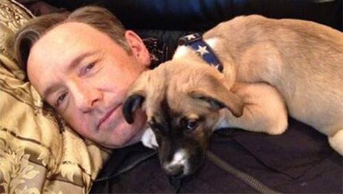 Kevin Spacey adopts dog, names her 'Boston' in honor of the city 'House of Cards' actor adopted the little mutt from the North Shore Animal League.