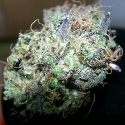 sirgoofy-:  Some purp called Liberty