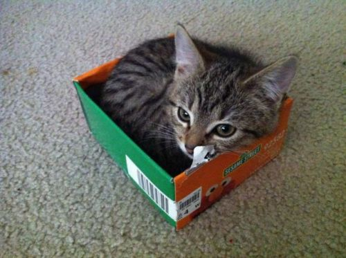 amriah:  Kitteh!  IT'S A TINY BABY KITTY IN A TINY BABY SHOE BOX EEEEEEEEEEEEEE