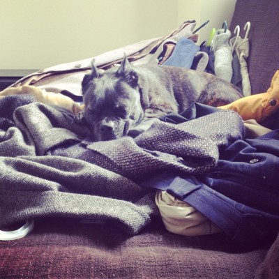 sassyfontaine:  Gpa making himself comfortable on a pile of coats