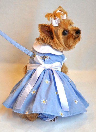 More new items for Spring. This lovely dog dress is adorned with daisies on a sky blue background. A matching leash and a ruffled pair of panties complete the outfit.