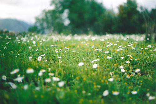 floralls:  'Where the dreamers go' by Rob Aparicio on Flickr.