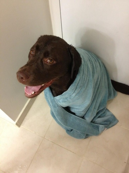 littlepeekaboo88:  Marshy got a bath
