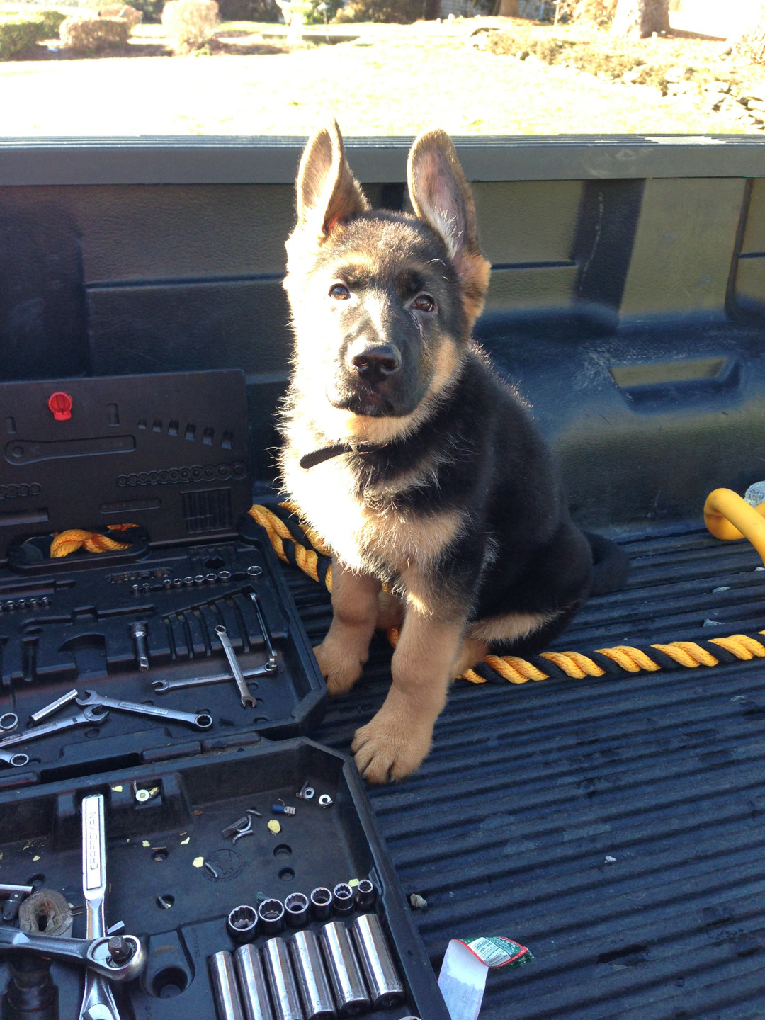 countrygirlstuckinacity:  It's a German Shephard you can not not reblog!