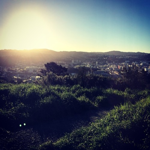 Beautiful weather & daylight saving calls for walks after work! #wellington #healthy