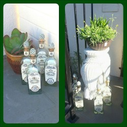 The #TequilaFortaleza #gods protected my house over the #weekend. #Tequila #shrine #Fortaleza #goodtimes @blueyz48 @lucero0208 @alisnel