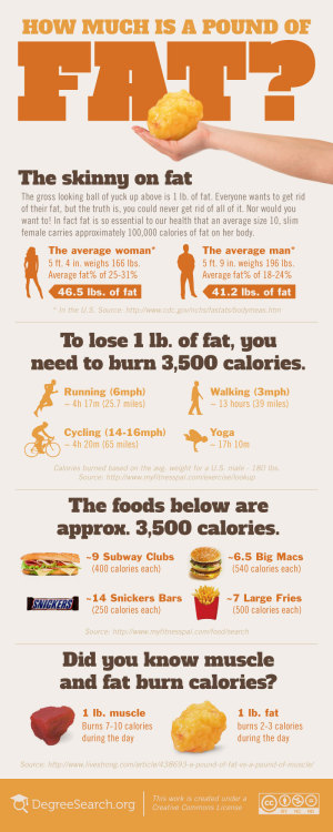 How Much is a Pound of Fat Infographic