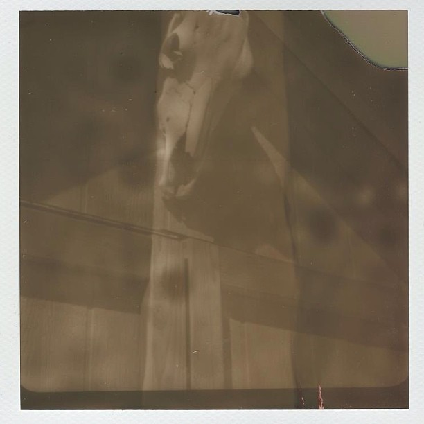 PX600 (expired 06-2011) loaded in darkness. Shot with a Polaroid 800. Then reloaded in pack and ejected through a Polaroid One Step. Shot at EV16 with an orange filter.  (at Becca Mae's Farm)