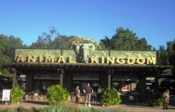 Happy opening anniversary Animal Kingdom!  Be sure to share your favorite memory of the fourth park built as part of the Walt Disney World resort theme parks!
