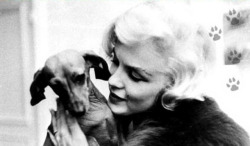 our-girl-marilyn:  Marilyn with the French Ambassador's dachshund; March 1959.