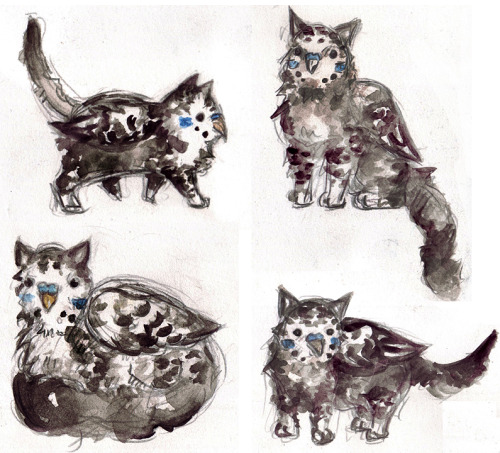 Have some little catudgies! Catudgies are hybrids between cats and budgies, my girlfriend and I's favourite animals ;3; This is the original catudgie, drawn by her.