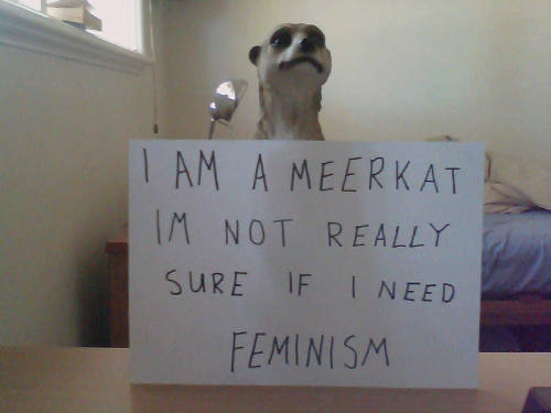 Yeah, but aren't meerkats a matriarchal species anyway? As in, all meerkats are girls and all meerdogs are boys, right?