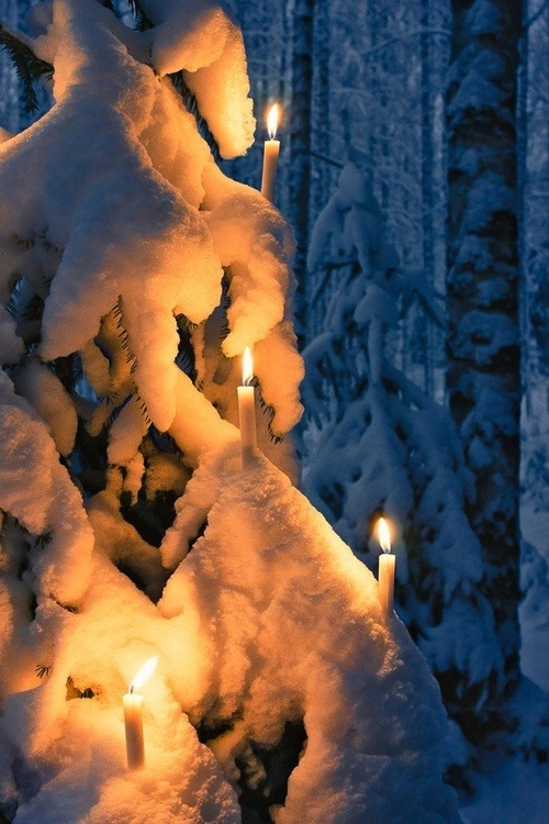 Candle Lit Tree, Finland photo via owen