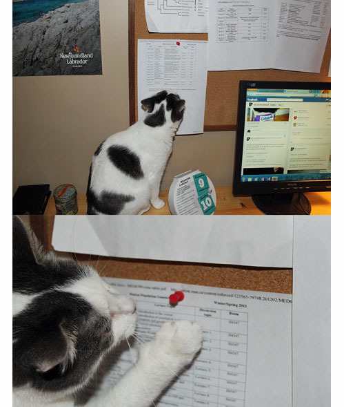 death-by-lulz:  tastefullyoffensive: Cats are jerks. My lovely followers, please follow this blog immediately!