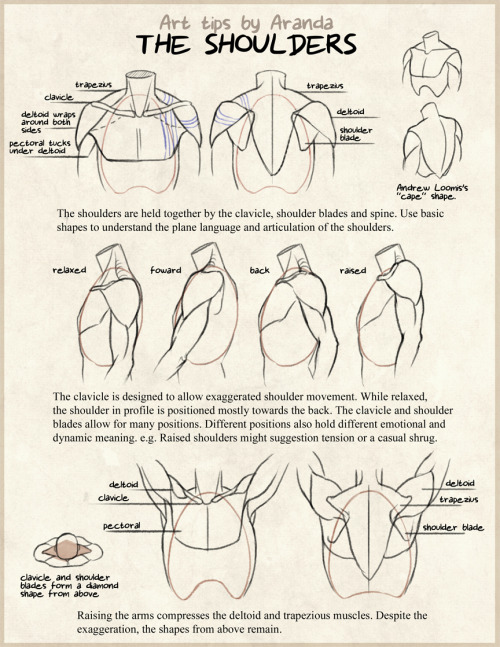 arandadill:  Shoulder Tips