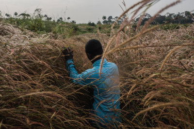 #daniel_berehulak, #ebola, #guinea, #sierra_leone, #new_york_times