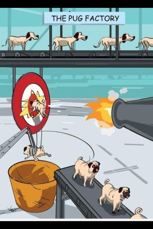 n-coal:  How pugs are made..