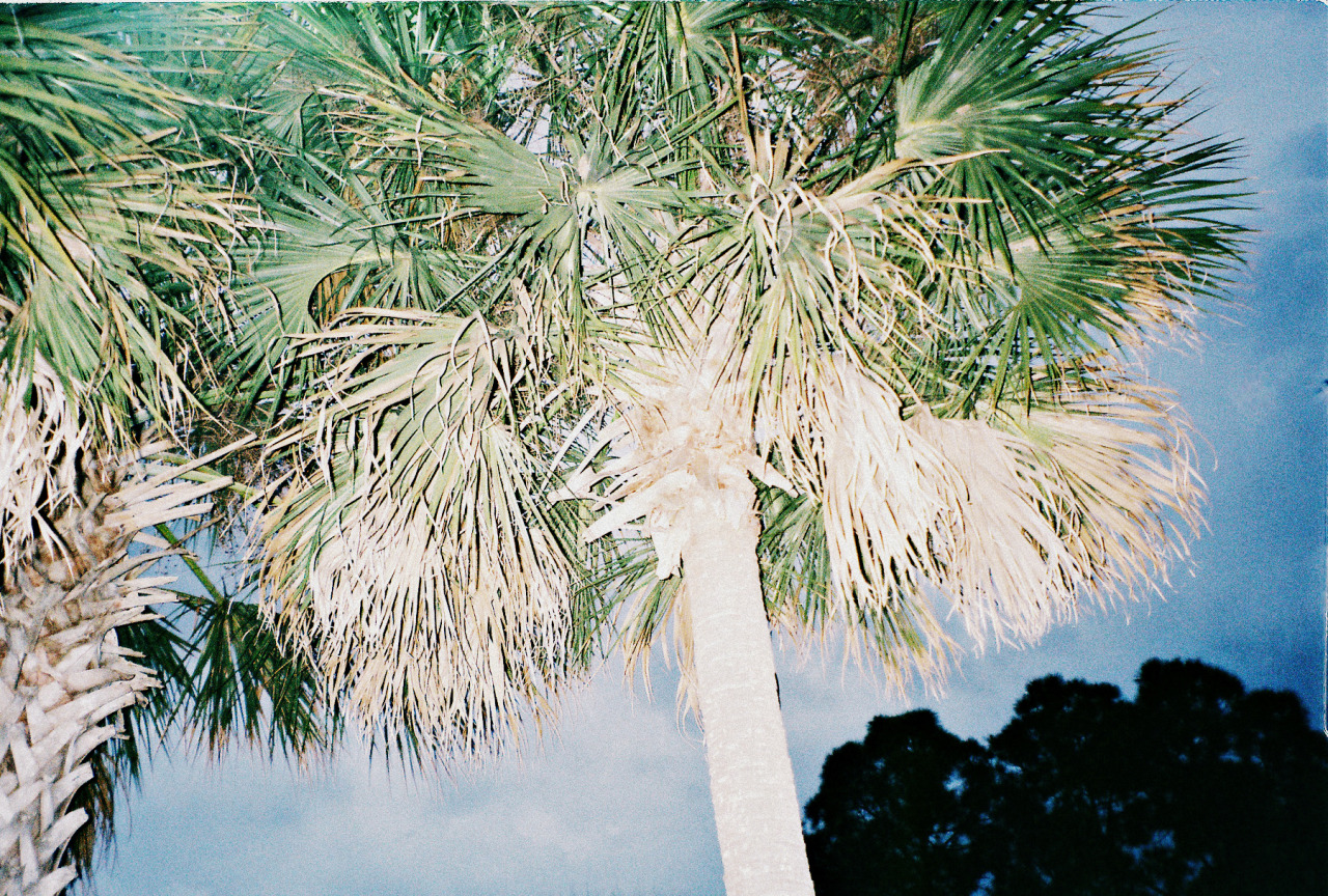 palms in melbourne