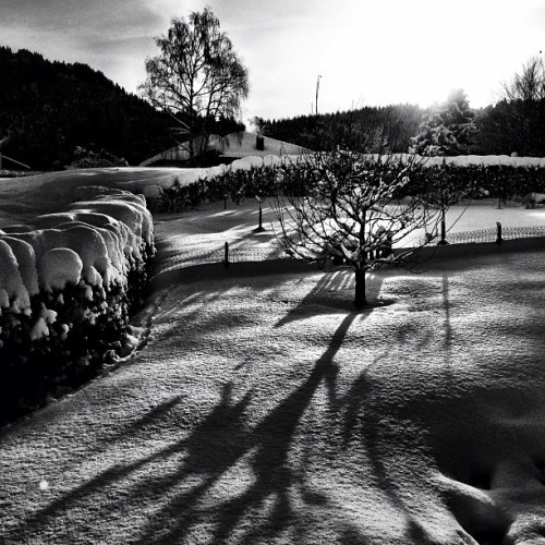 #sunrise in my #garden … #winter #snow #bw