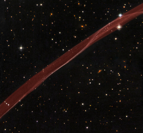 "drueisms:  A supernova ribbon, the one-millennium-old remnants from the death of a star. What created this unusual space ribbon? Most assuredly, one of the most violent explosions ever witnessed by ancient humans. Back in the year 1006 AD, light reached Earth from a stellar explosion in the constellation of the Wolf (Lupus), creating a ""guest star"" in the sky that appeared brighter than Venus and lasted for over two years. The supernova, now cataloged at SN 1006, occurred about 7,000 light years away and has left a large remnant that continues to expand and fade today. Pictured above is a small part of that expanding supernova remnant dominated by a thin and outwardly moving shock front that heats and ionizes surrounding ambient gas. SN 1006 now has a diameter of nearly 60 light years. Within the past year, an even more powerful explosion occurred far across the universe that was visible to modern humans, without any optical aid, for a few seconds. (via APOD: 2008 September 15 - SN 1006: A Supernova Ribbon from Hubble)"