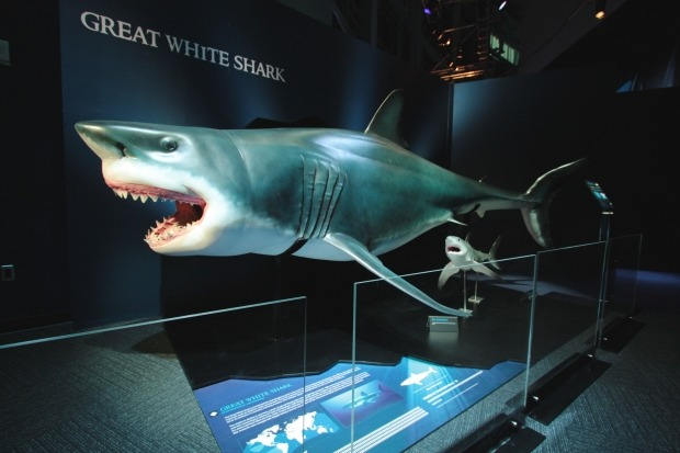 Planet Shark: Predator or Prey at the Montreal Science Centre