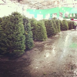 Not buying a tree…but if I was, it might be from here.  (at Festival Pavilion)
