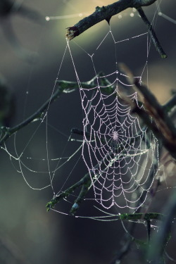 Morning Cobwebs