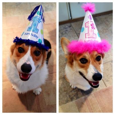 Happy 1st Birthday Mickie and Minnie!